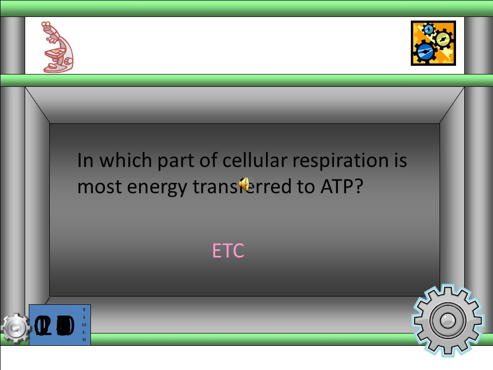 In which part of cellular respiration is most energy transferred to ATP