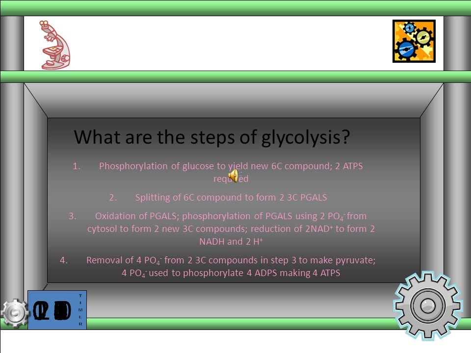 What are the steps of glycolysis
