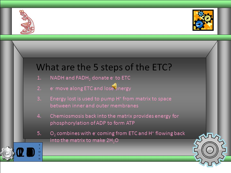 What are the 5 steps of the ETC