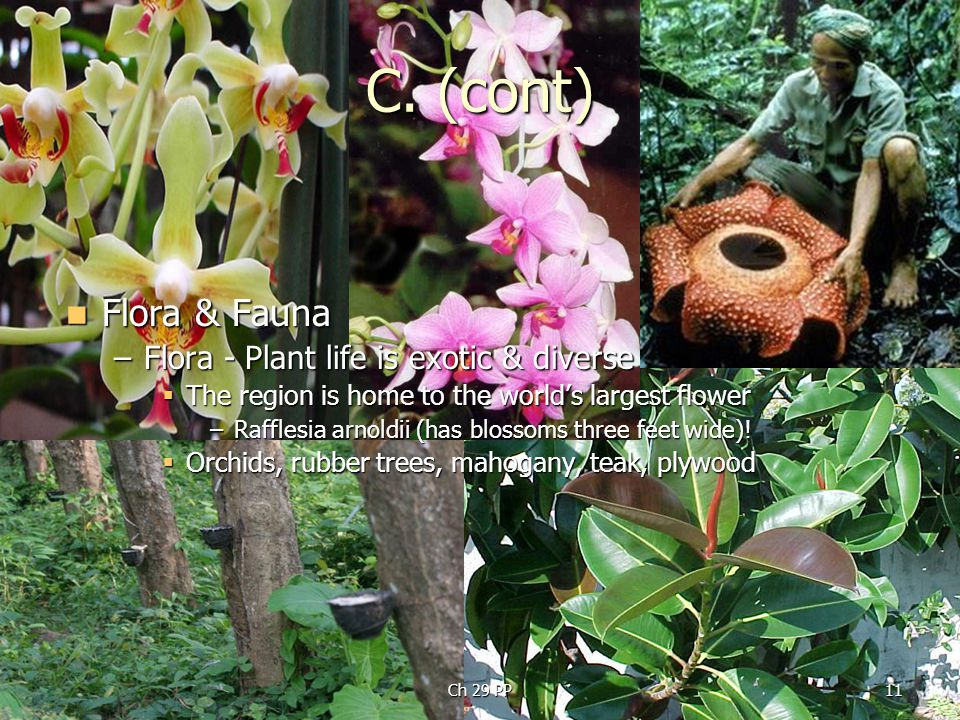 C. (cont) Flora & Fauna Flora - Plant life is exotic & diverse