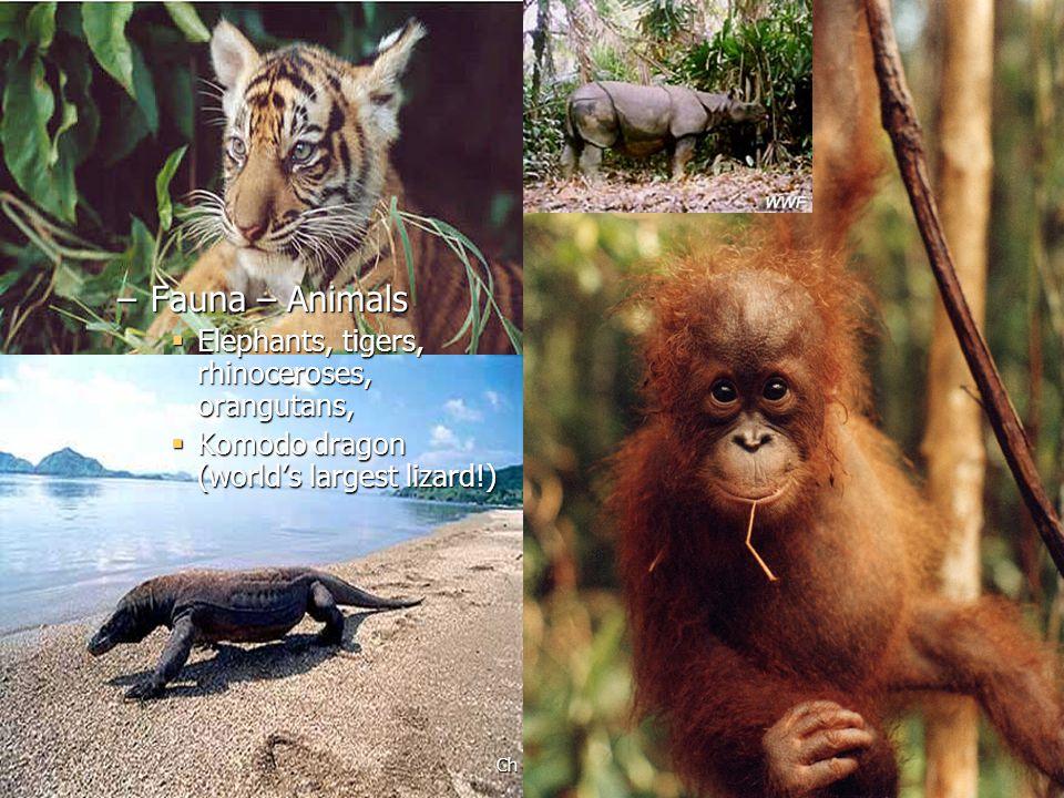 Fauna – Animals Elephants, tigers, rhinoceroses, orangutans,