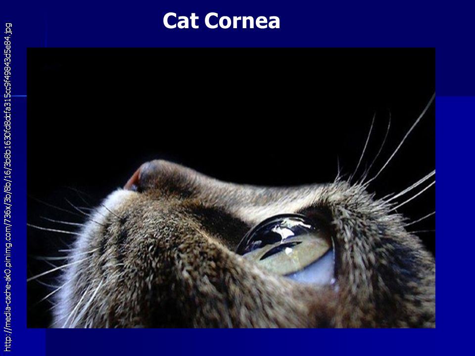 Cat Cornea http://media-cache-ak0.pinimg.com/736x/3b/8b/16/3b8b1630fd8dcfa315cc9f49843d5e84.jpg