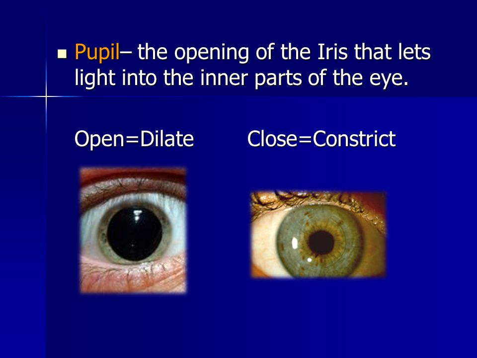 Pupil– the opening of the Iris that lets light into the inner parts of the eye.