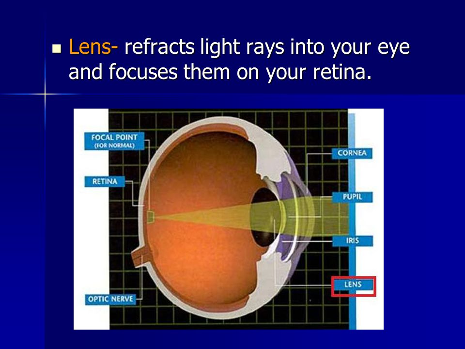 Lens- refracts light rays into your eye and focuses them on your retina.