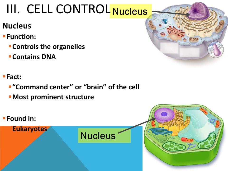III. Cell Control Nucleus Nucleus Nucleus Function: