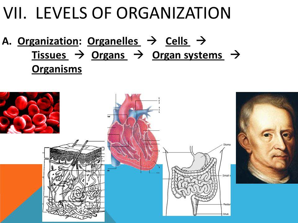 VII. Levels of Organization