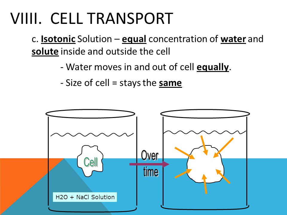 VIIII. Cell Transport - Water moves in and out of cell equally.