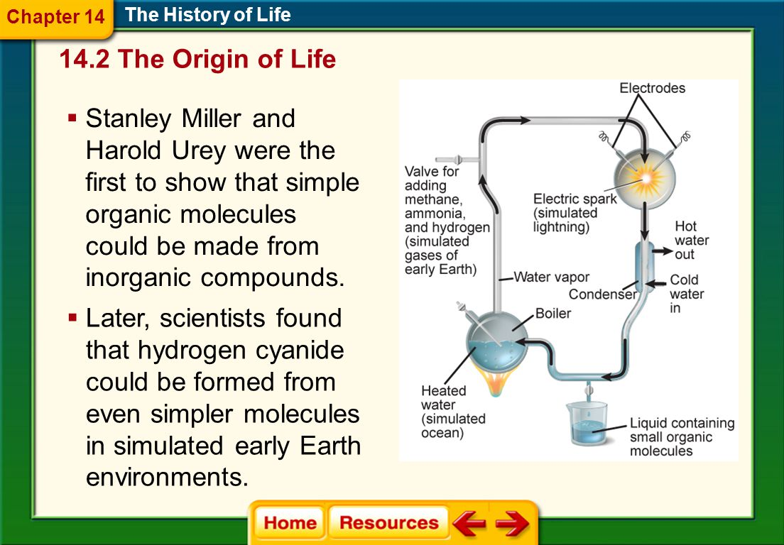 Chapter 14 The History of Life The Origin of Life.