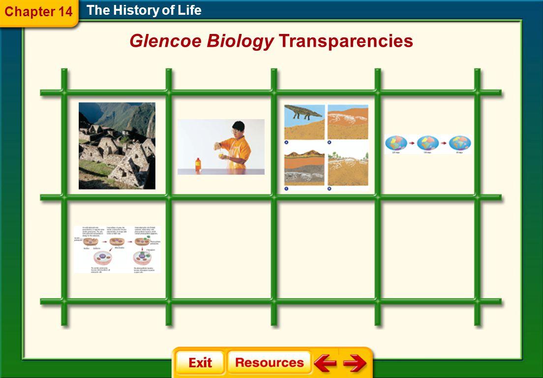 Glencoe Biology Transparencies
