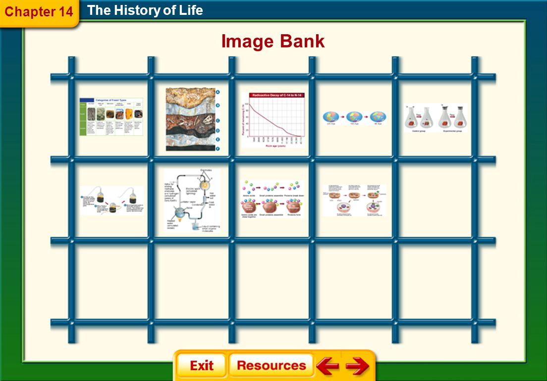Chapter 14 The History of Life Image Bank