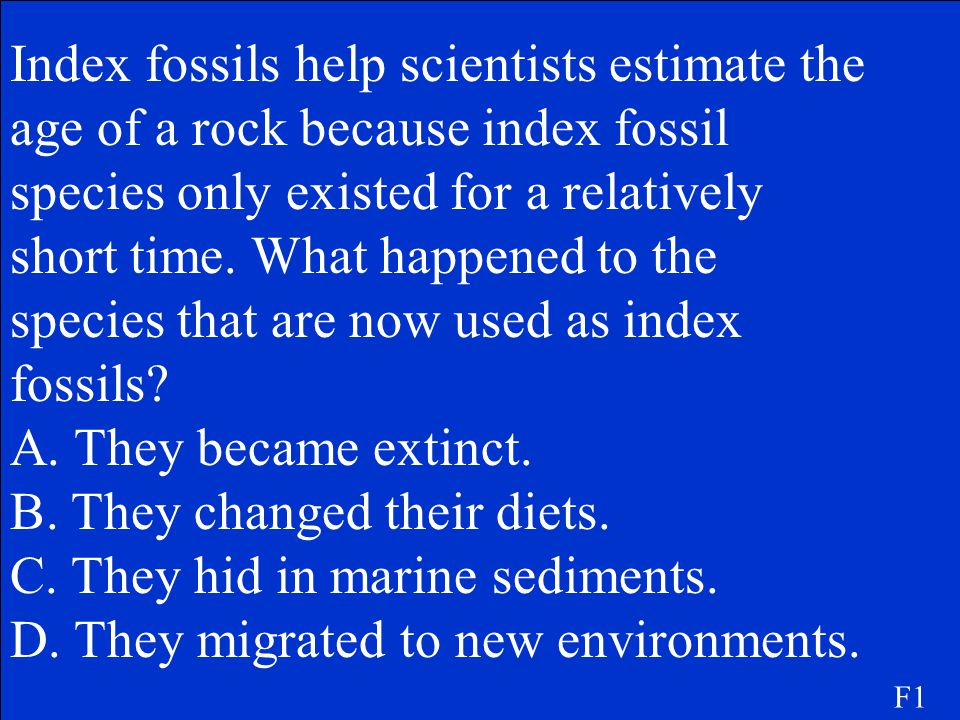B. They changed their diets. C. They hid in marine sediments.