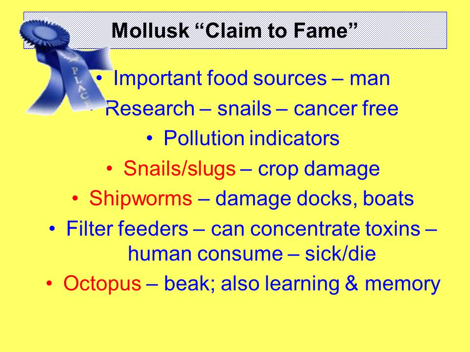 Mollusk Claim to Fame