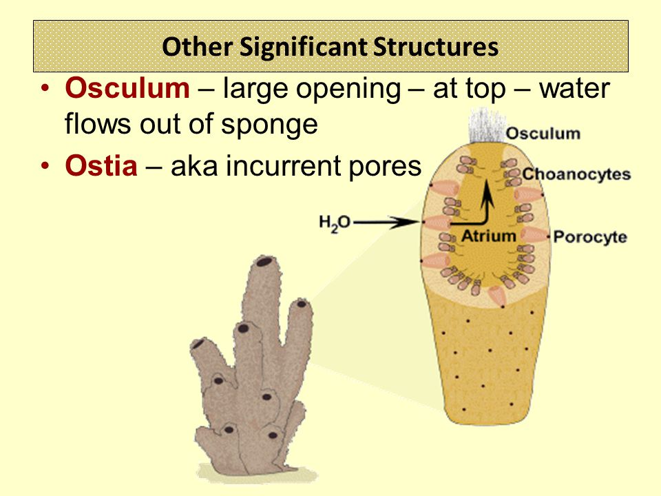 Other Significant Structures