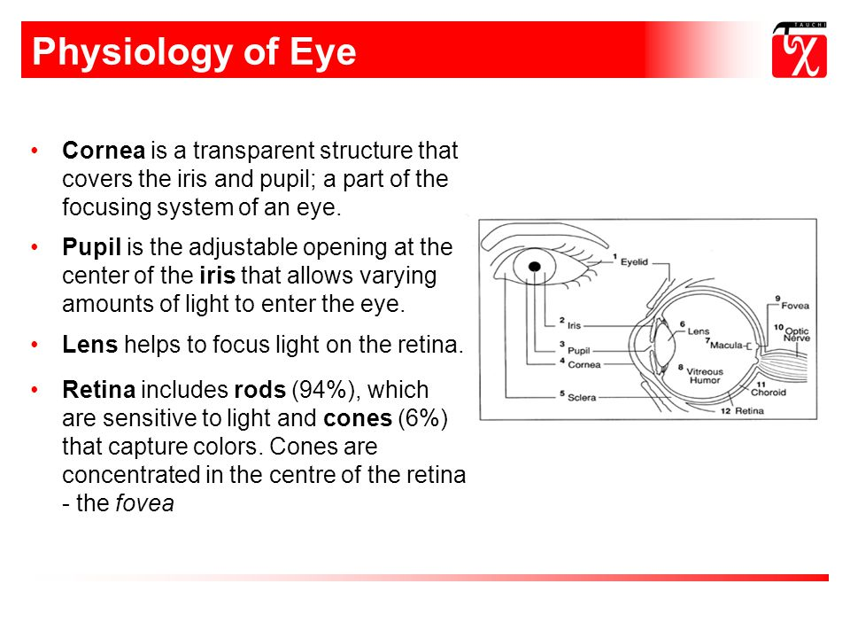 Physiology of Eye Cornea is a transparent structure that covers the iris and pupil; a part of the focusing system of an eye.
