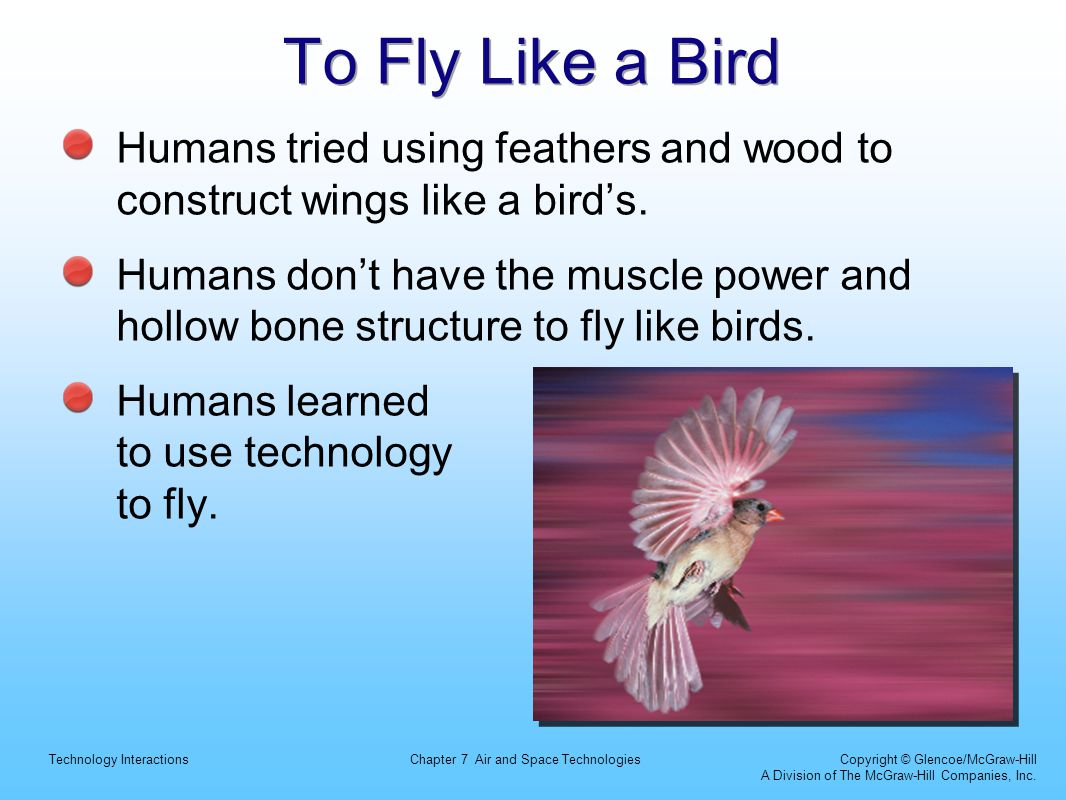 To Fly Like a Bird Humans tried using feathers and wood to construct wings like a bird's.