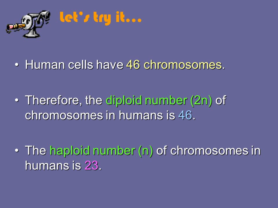 Let's try it… Human cells have 46 chromosomes.