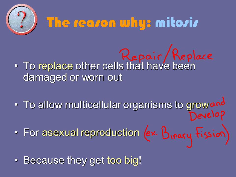 The reason why: mitosis