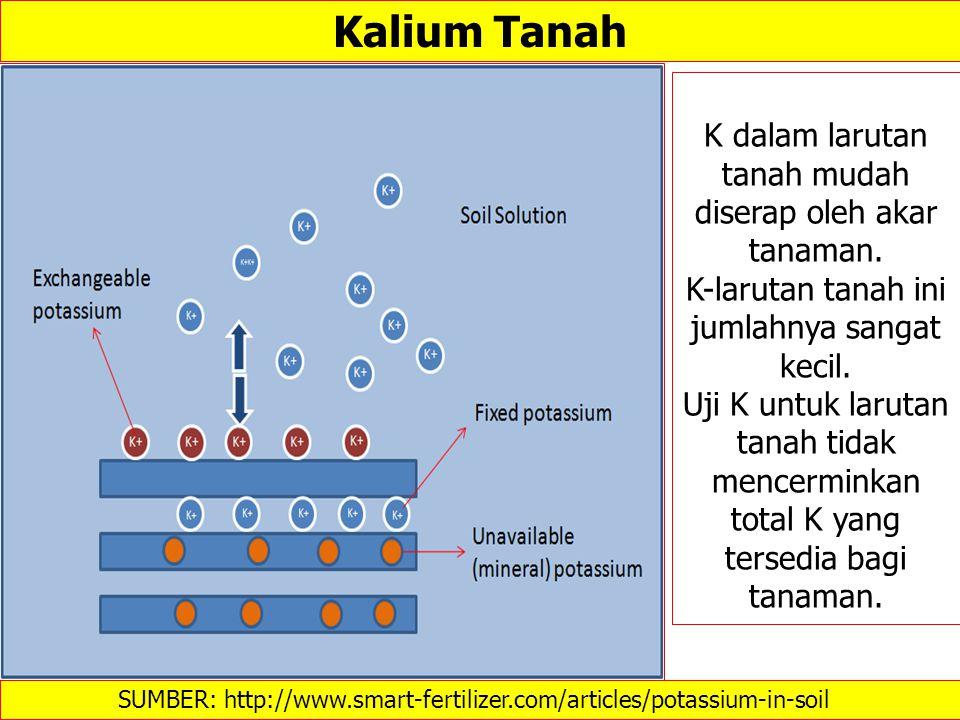 Kalium Tanah K dalam larutan tanah mudah diserap oleh akar tanaman.