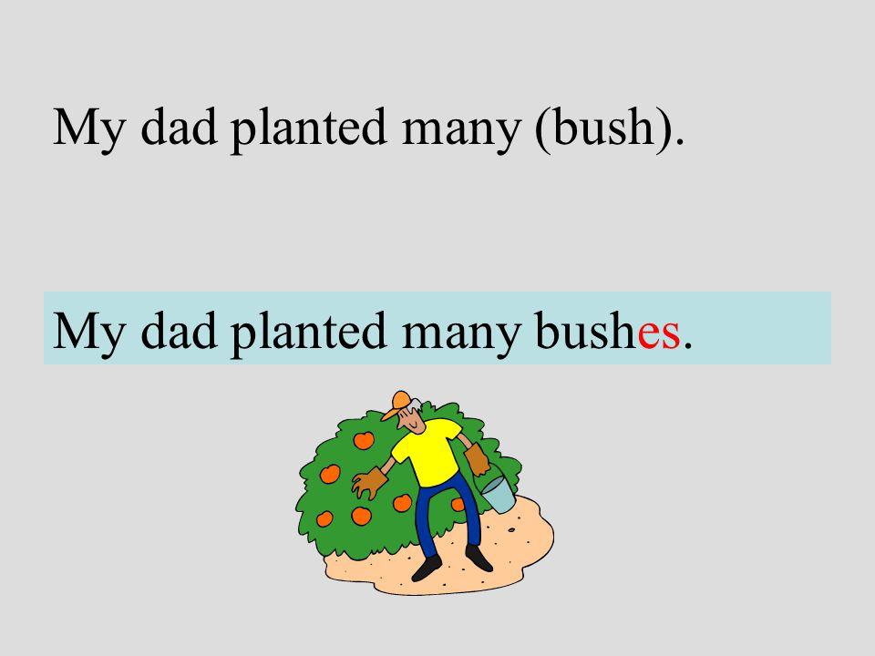 My dad planted many (bush).