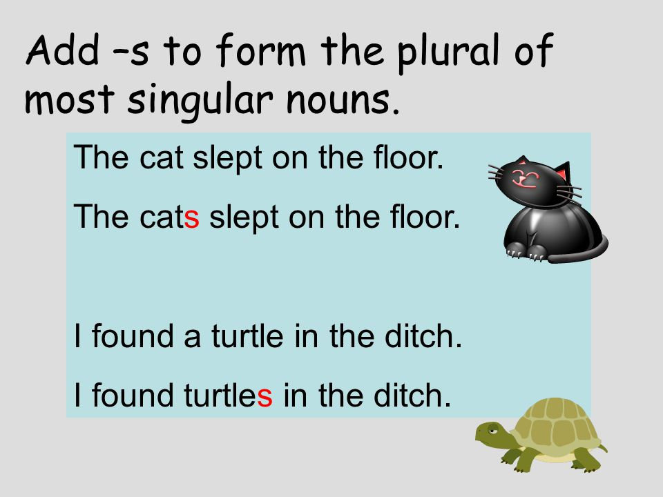 Add –s to form the plural of most singular nouns.