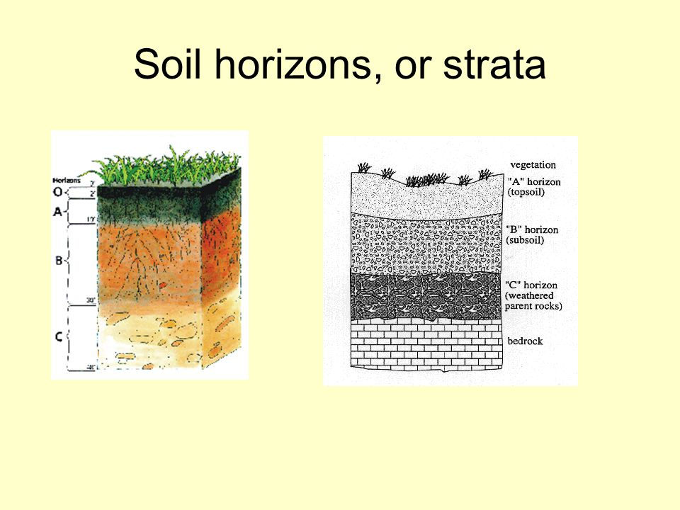 Soil horizons, or strata