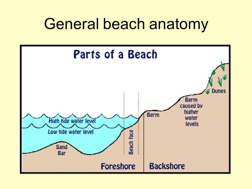 General beach anatomy
