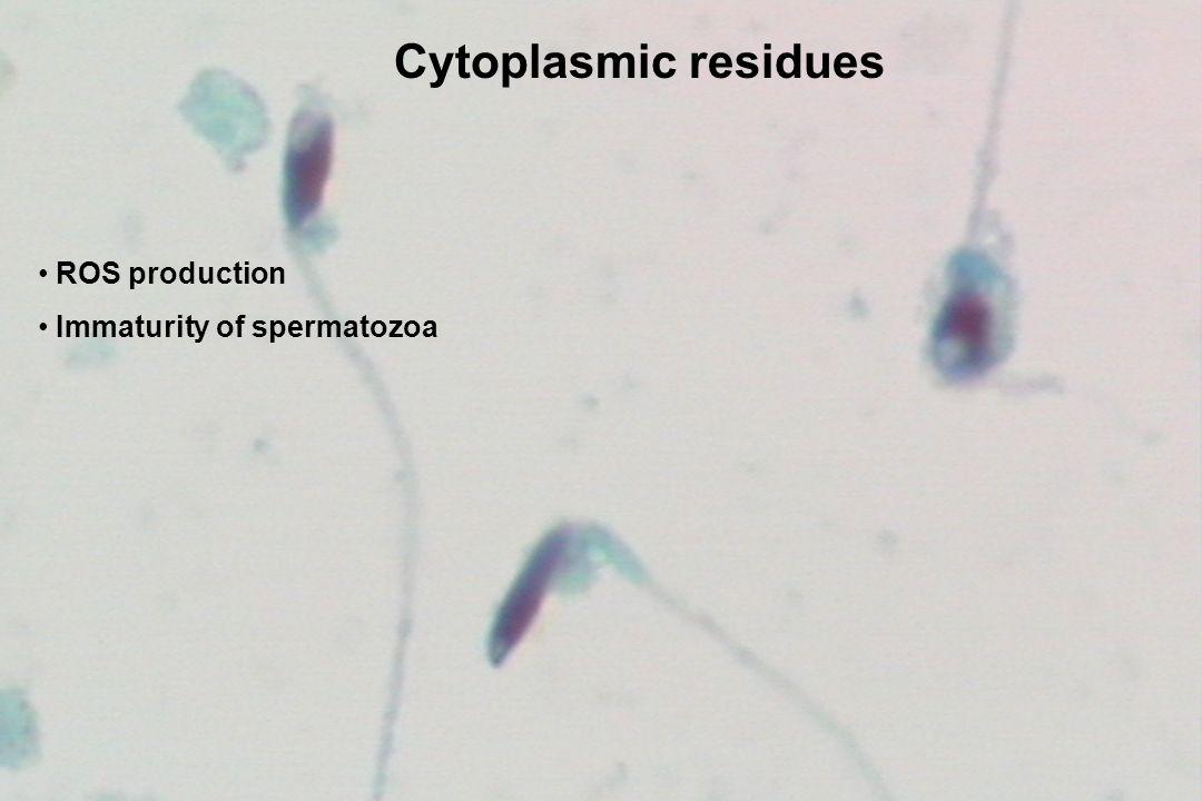 Cytoplasmic residues ROS production Immaturity of spermatozoa 28