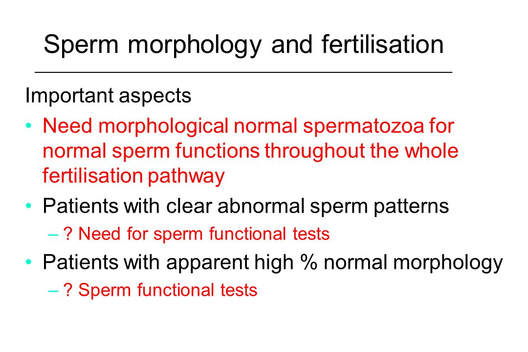 Sperm morphology and fertilisation