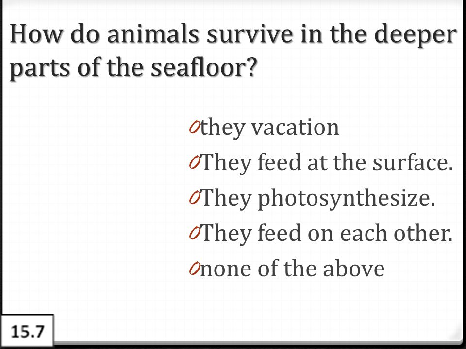 How do animals survive in the deeper parts of the seafloor