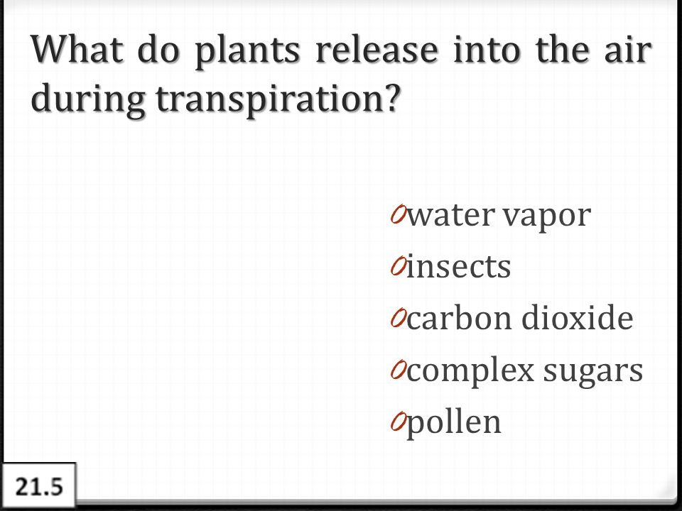 What do plants release into the air during transpiration
