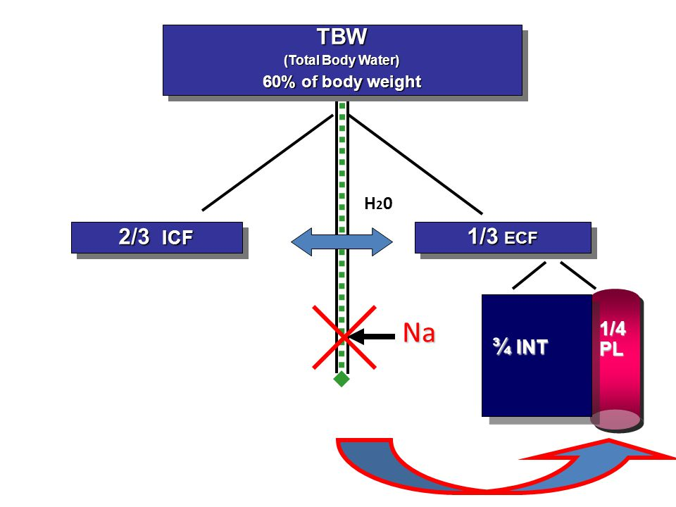Na TBW 2/3 ICF 1/3 ECF ¾ INT H20 1/4 PL 60% of body weight