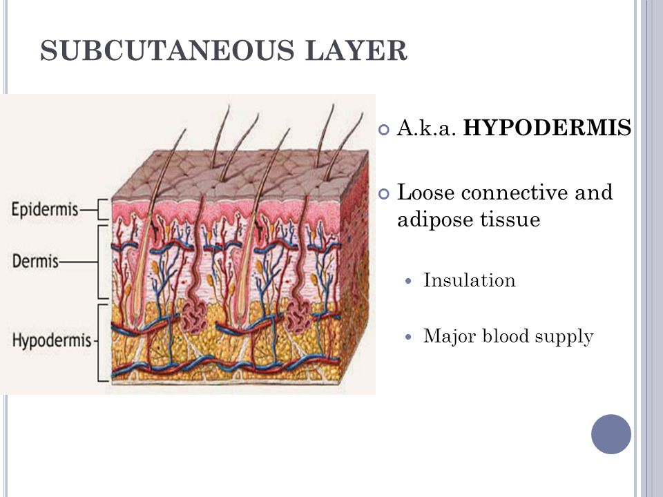 SUBCUTANEOUS LAYER A.k.a. HYPODERMIS