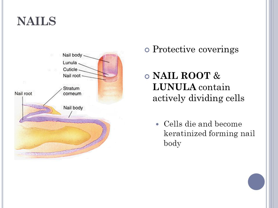 NAILS Protective coverings