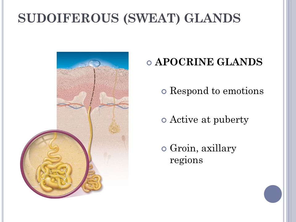 SUDOIFEROUS (SWEAT) GLANDS
