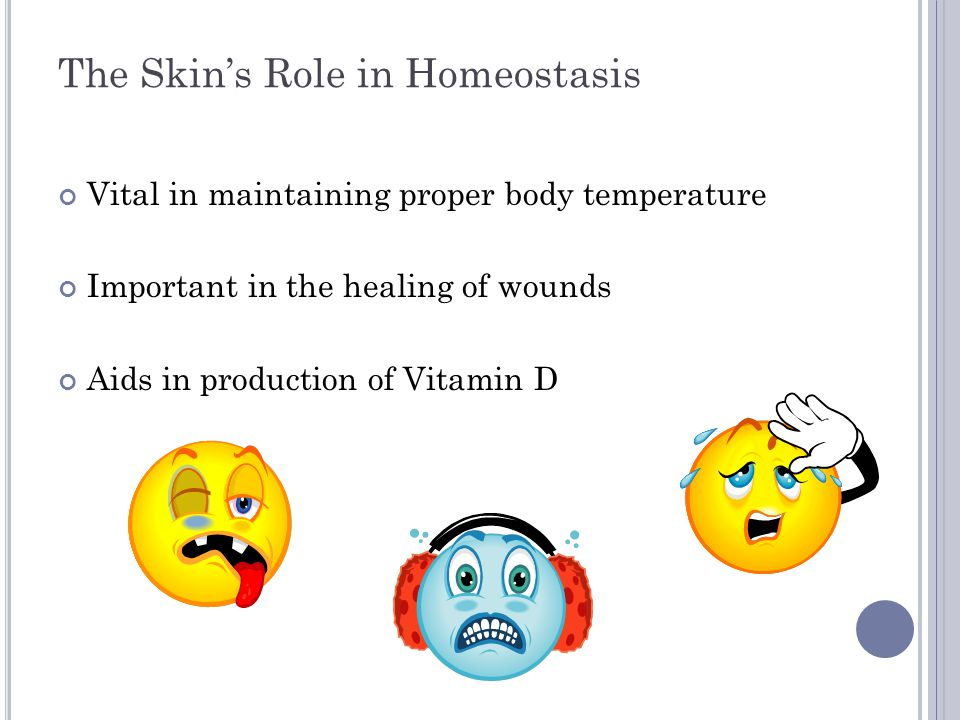 The Skin's Role in Homeostasis