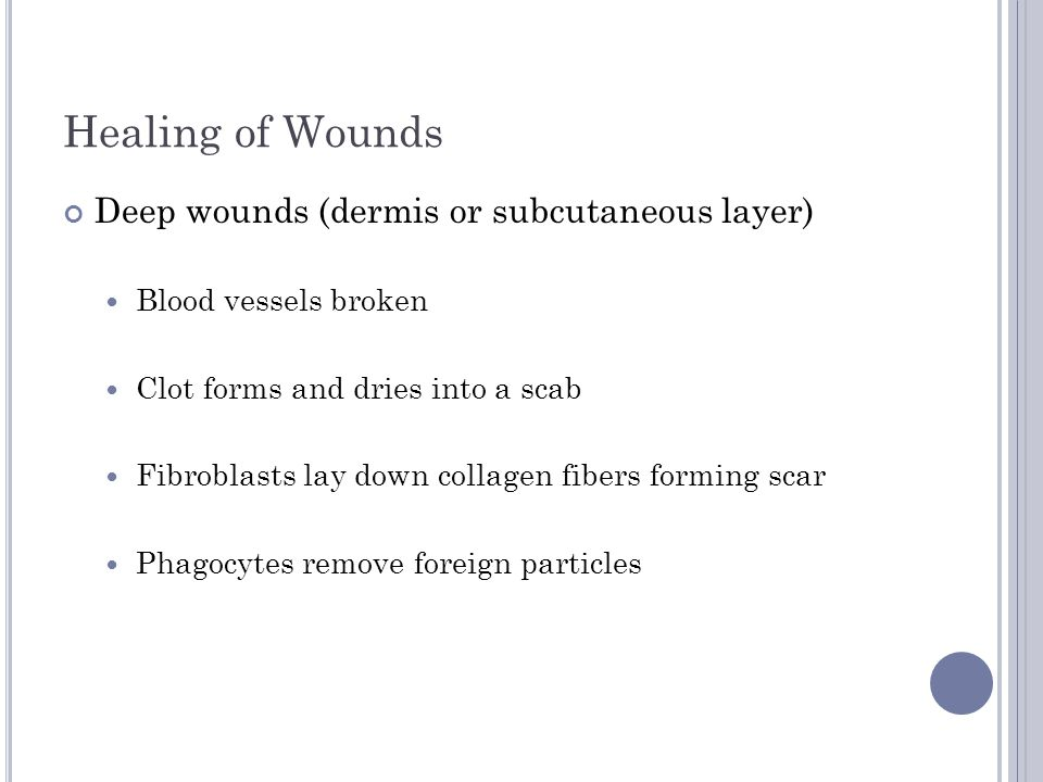 Healing of Wounds Deep wounds (dermis or subcutaneous layer)