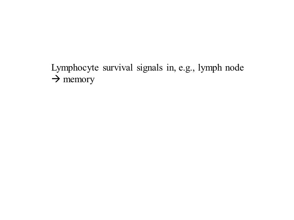 Lymphocyte survival signals in, e.g., lymph node