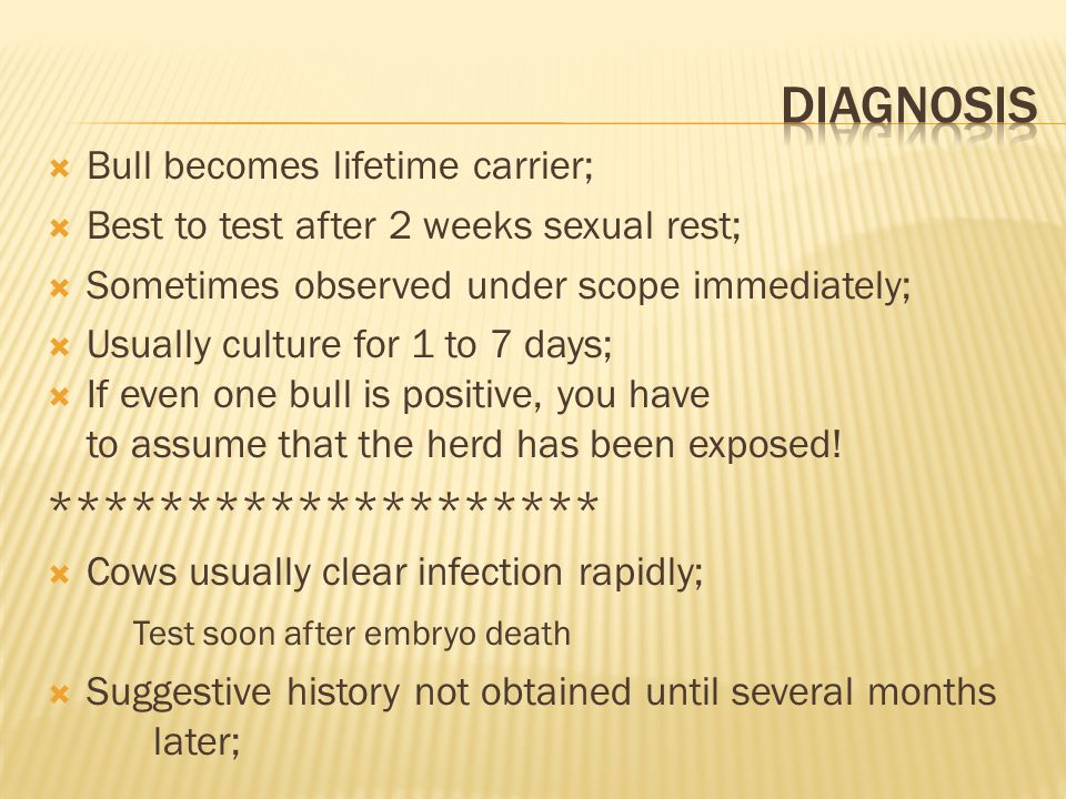 diagnosis ******************** Bull becomes lifetime carrier;