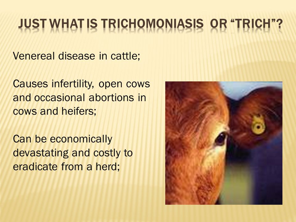 Just what is trichomoniasis or trich