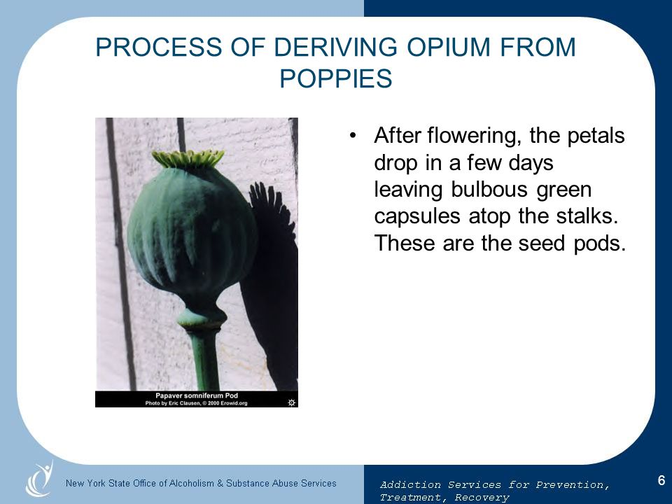 PROCESS OF DERIVING OPIUM FROM POPPIES