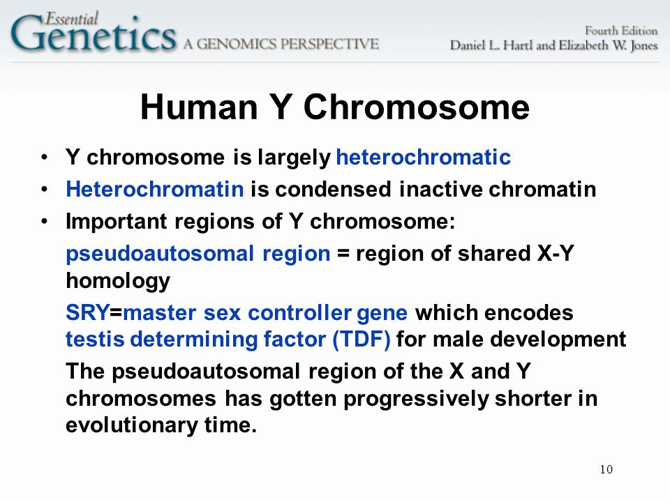 Human Y Chromosome Y chromosome is largely heterochromatic