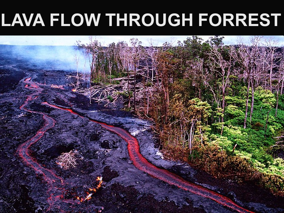 LAVA FLOW THROUGH FORREST