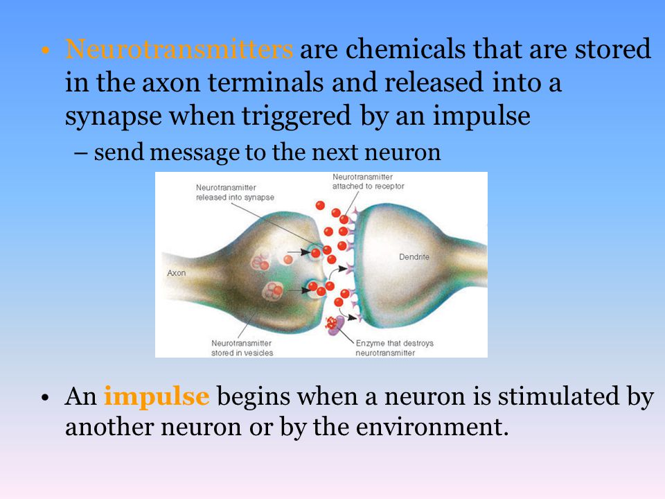 Neurotransmitters are chemicals that are stored in the axon terminals and released into a synapse when triggered by an impulse