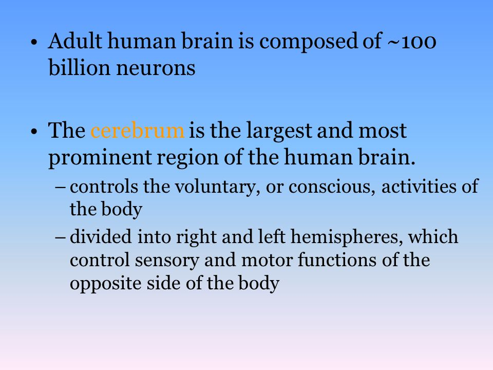 Adult human brain is composed of ~100 billion neurons