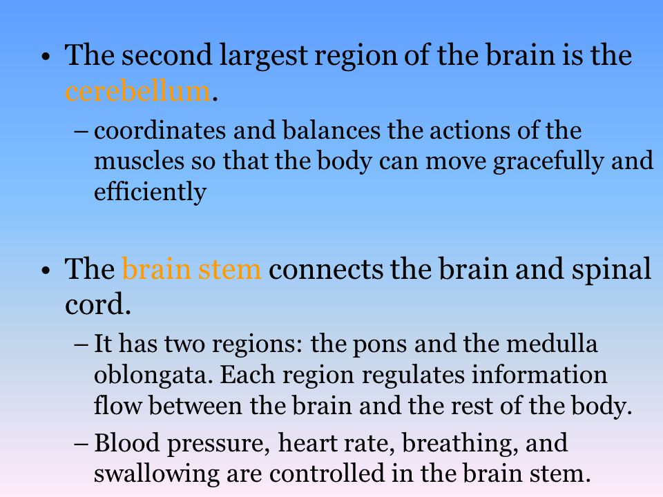 The second largest region of the brain is the cerebellum.