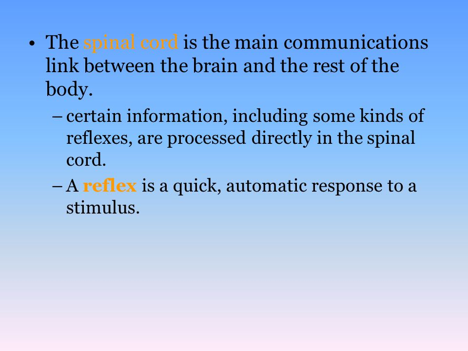 The spinal cord is the main communications link between the brain and the rest of the body.