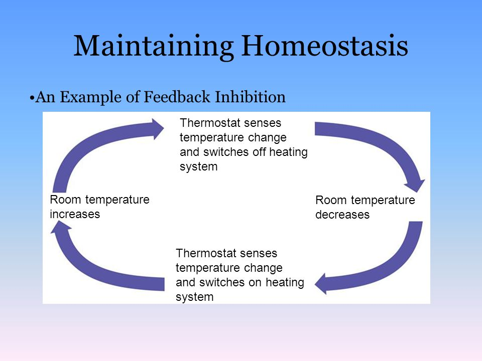 Human Physiology/Homeostasis