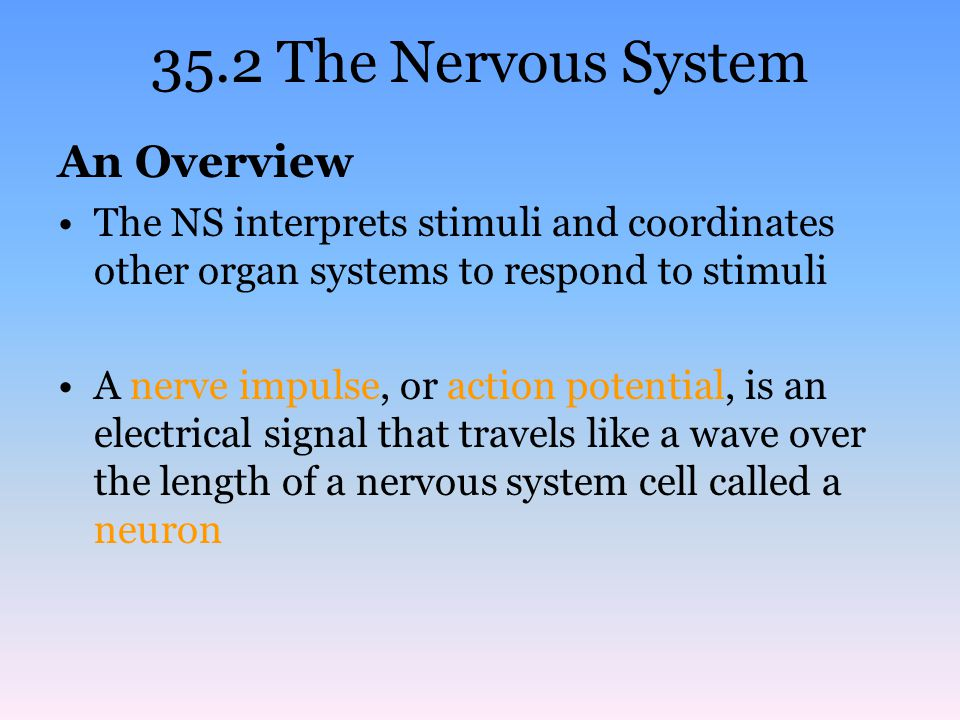 35.2 The Nervous System An Overview