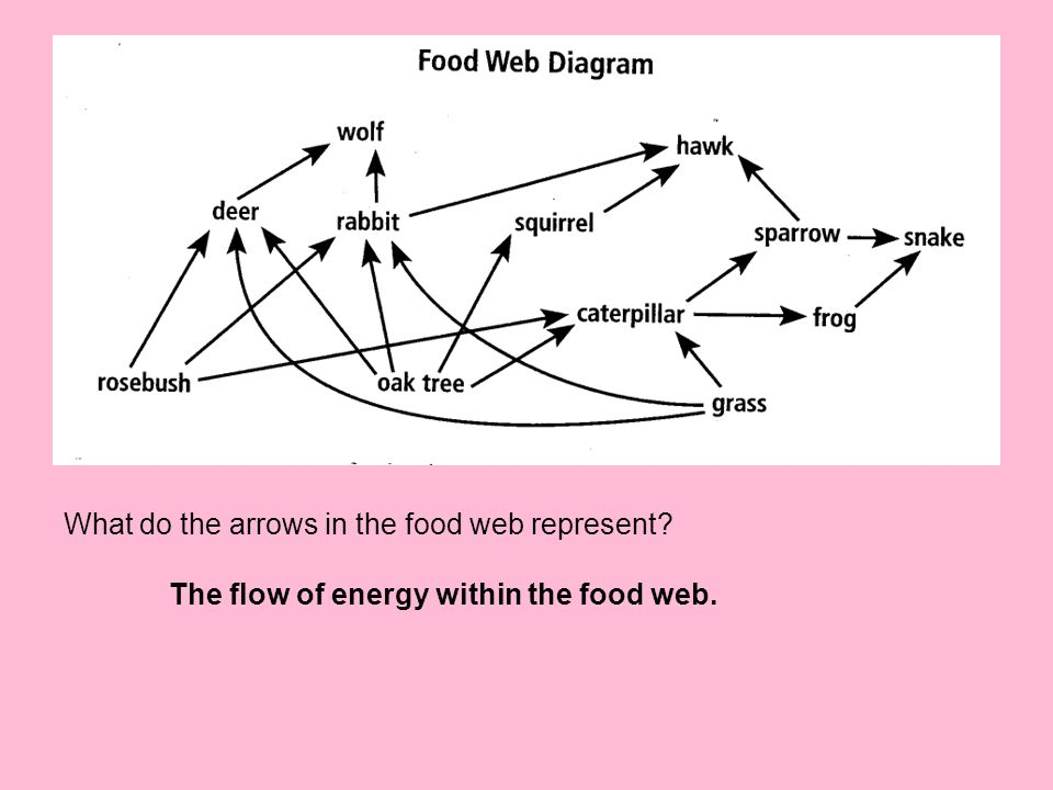 What do the arrows in the food web represent