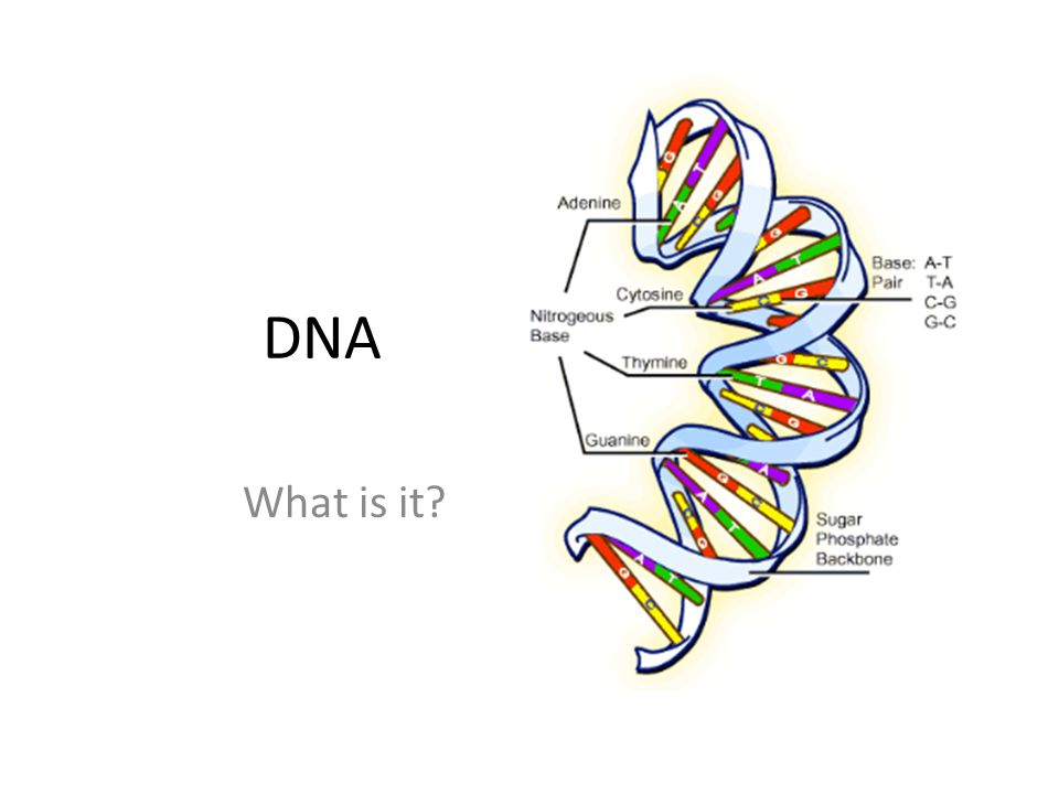 DNA What is it